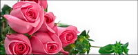 Ein Bukett von rosa Rosen Bildmaterial