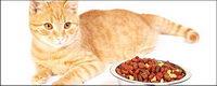Les petits chats mat��riel photo-9