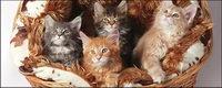 Kleine Katze Bildmaterial-7