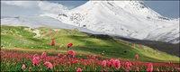 Schneebedeckte Berge von Blumen Bildmaterial