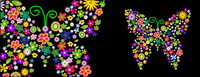 Fleurs du papillon