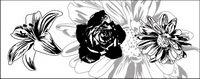 Noir et blanc, fleurs