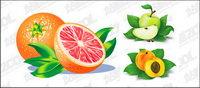 Naranjas, manzanas, melocot¨®n vector material