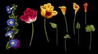 Computer-Rendering von Blumen