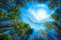 les bois du paysage