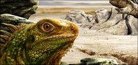psd Destacado lagartos capas material