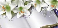 Livres et lily