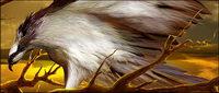Hawks psd Materials