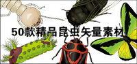 exquisitos insectos-1