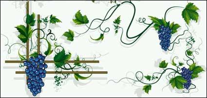 Link toGrapes, grape vines, grape leaf border vector material