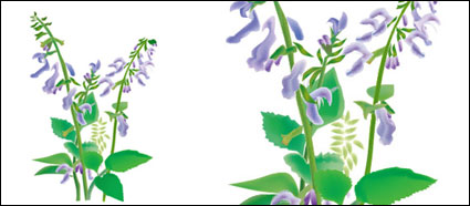 Chinese herbal medicine – danxiong vector