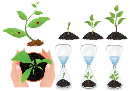 Vector plant seedlings