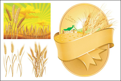 Wheat theme vector of material