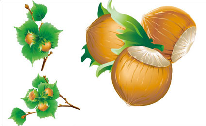 Vector 5 chestnuts