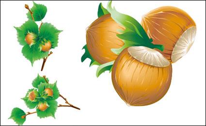 Vector 5 chestnuts