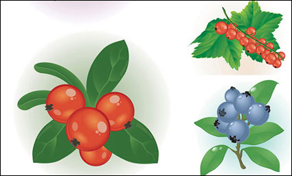 Vector of small red berries
