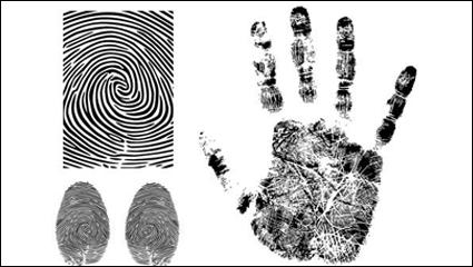 Link toFingerprint vector -3