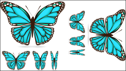 Link toBeautiful butterfly material 03 - vector