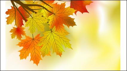Link toBeautiful maple leaf background 01 - vector