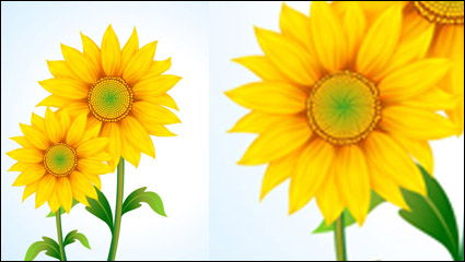 Link toBeautiful sunflower vector material