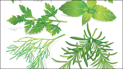 Herbal leaves 05– vector material