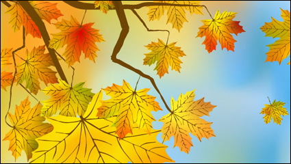 Link toBeautiful maple leaf background 03 - vector