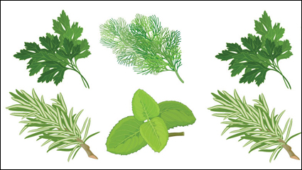Link toChinese herbal foliage 04 - vector
