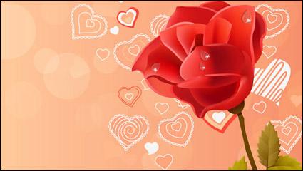 Pink rose red rose vector
