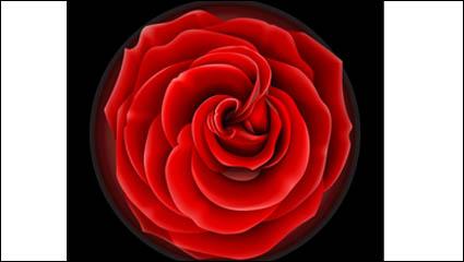 Roses vector material