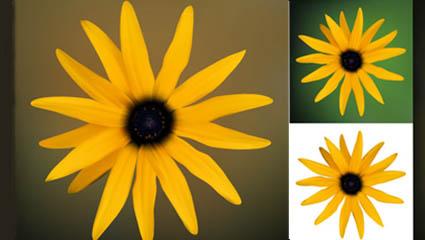 Small daisy vector