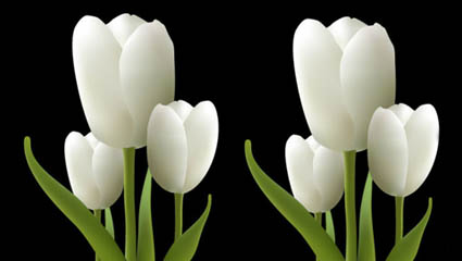 Link toWhite tulips vector