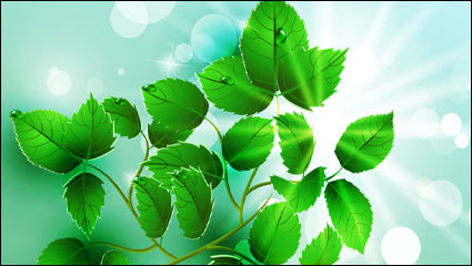 Beautiful light green leaves vector