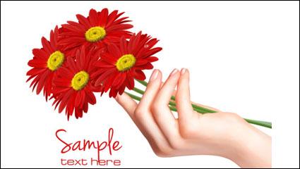 Chrysanthemum 02 – vector material