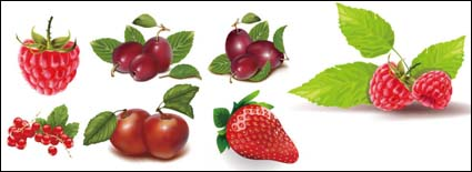 Large red berries, strawberry vector
