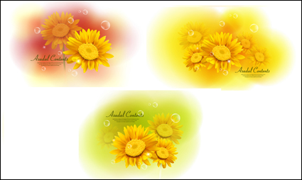 Link toYellow chrysanthemum dimorphotheca vector materials