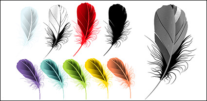 Vector material beautifully colored feathers