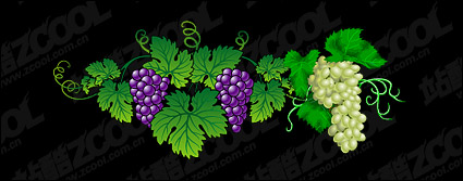 Link toVector exquisite grape material